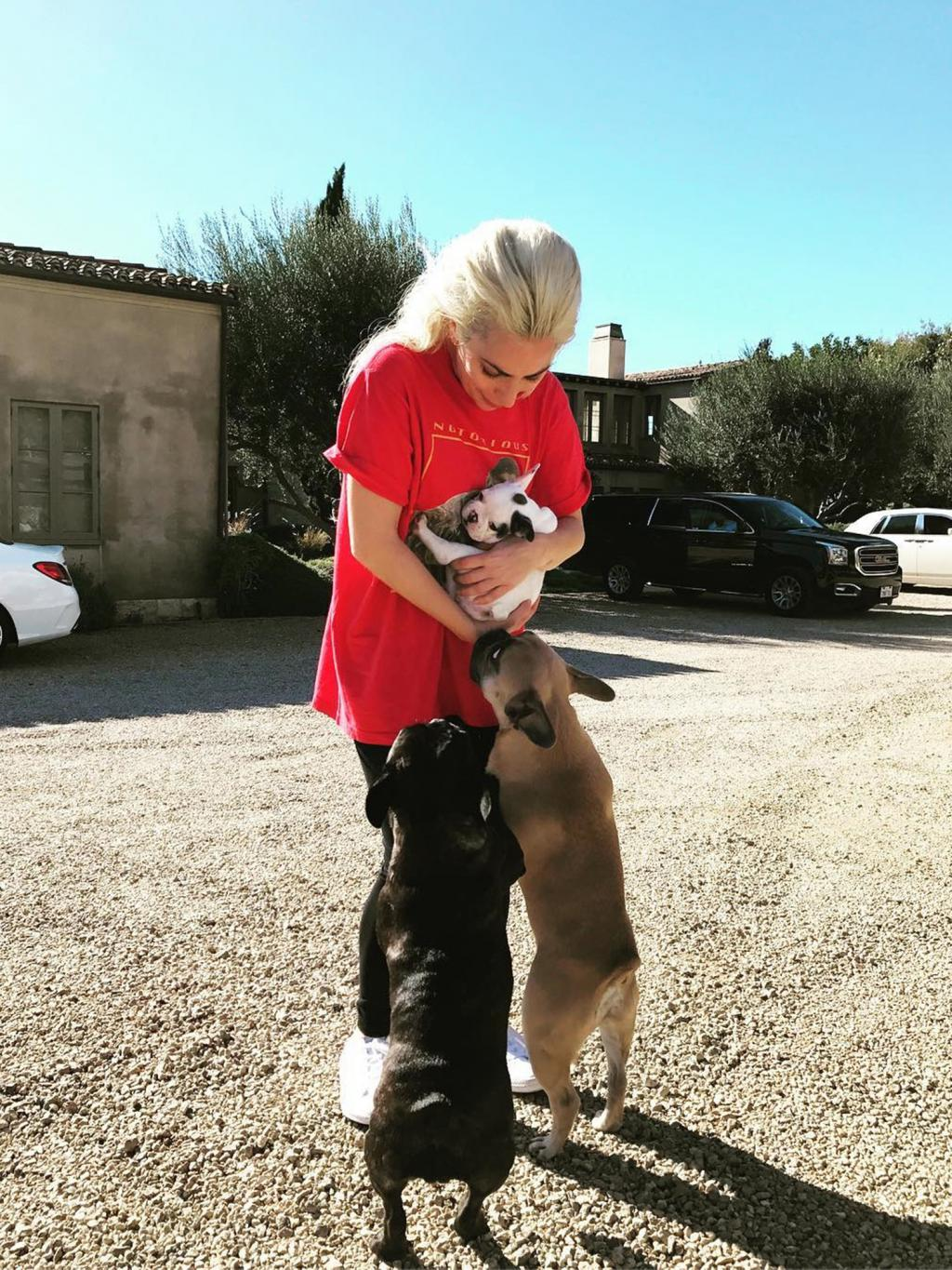 Lady Gaga Welcomes a New Family Member  '  See Her Adorable Puppy!