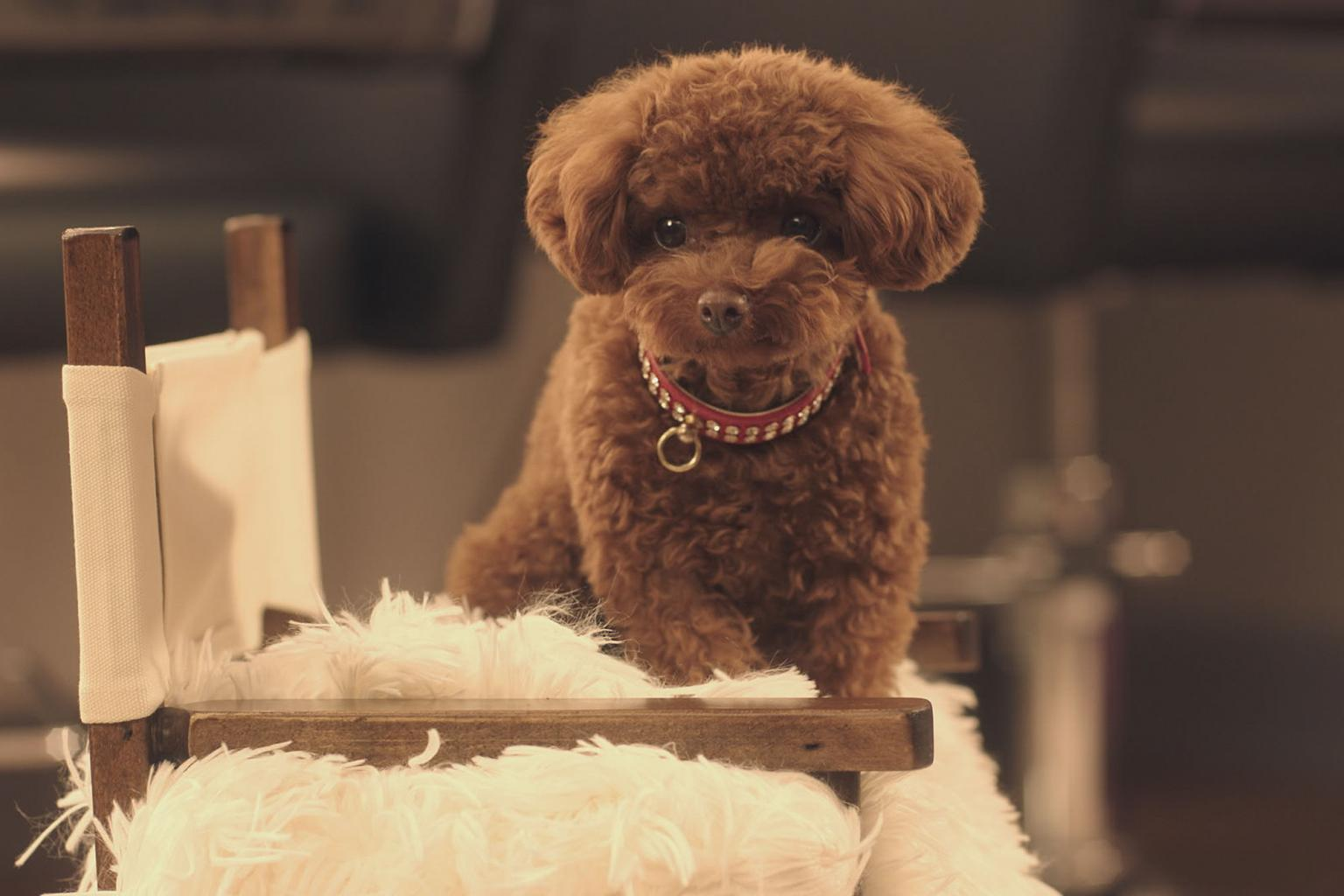 Katy Perry  's Dog Nugget Lands Her Own Commercial and 4 Other Celebrity Pets Who Found Stardom