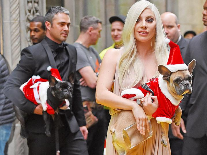 Lady Gaga -- Frenchienacious Christmas Greetings