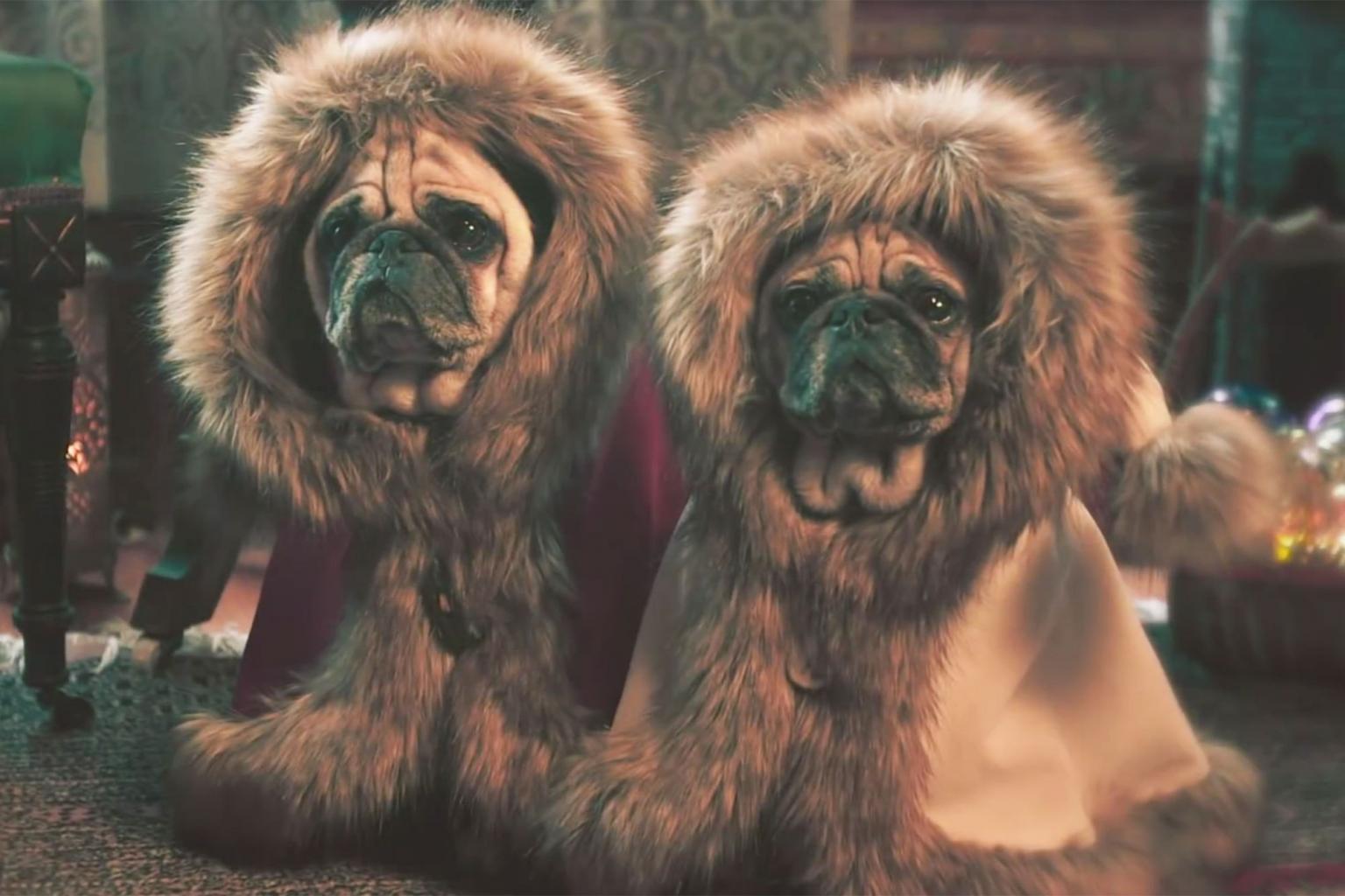 Watch: Precious Pugs Make Winter Wonderland Even More Wonderful