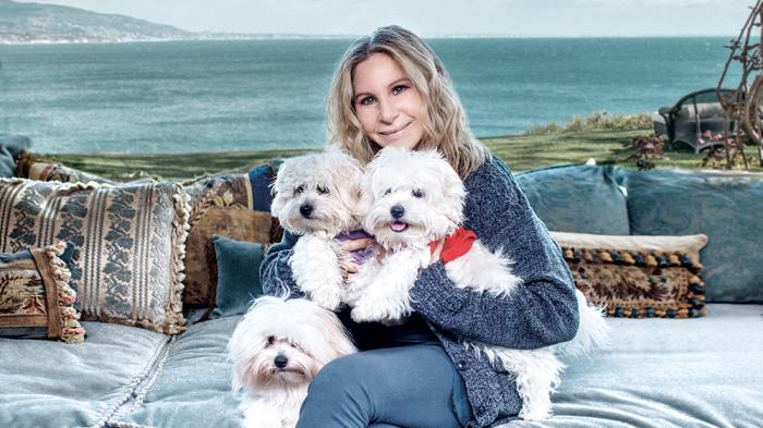 Barbra Streisand Had Her Beloved Dog Samantha Cloned Meet Miss Scarlett and Miss Violet